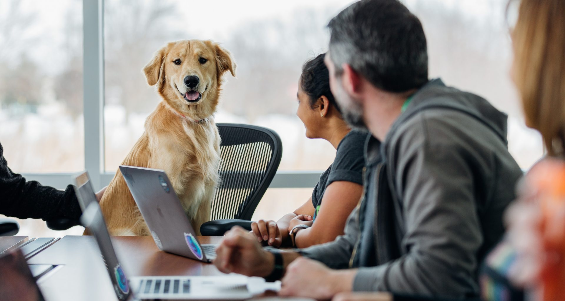 staff welcome a furry friend on Take Your Dog to Work Day